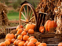 Harvest and Halloween Backgrounds for Green Screen or layout design